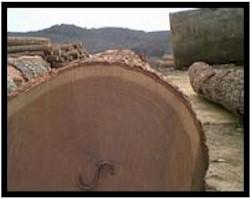 Taylor Lumber Flooring - Wood Flooring
