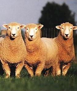 Woolshire Carpet - Carpeting